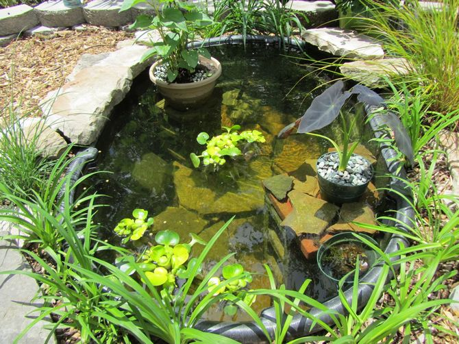 Способы оформления водоема