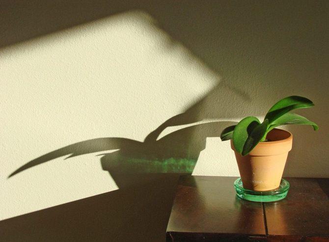 Уход за декоративно-лиственными комнатными растениями в период покоя