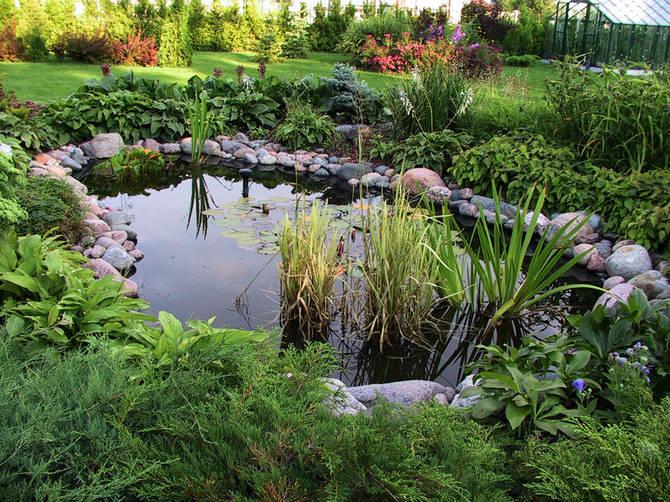 Растения, наиболее подходящие для различных водоемов