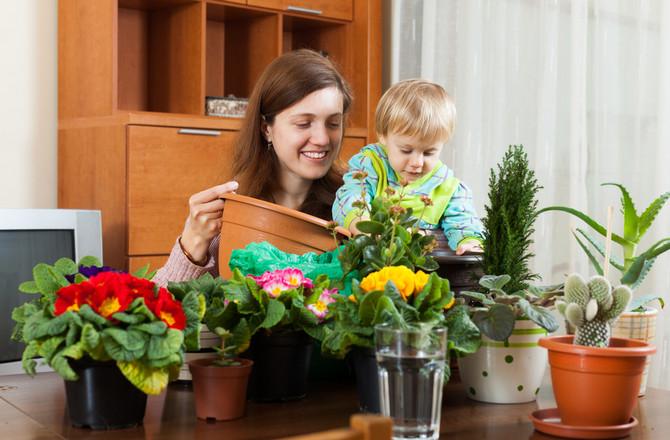 Безопасные комнатные растения и цветы