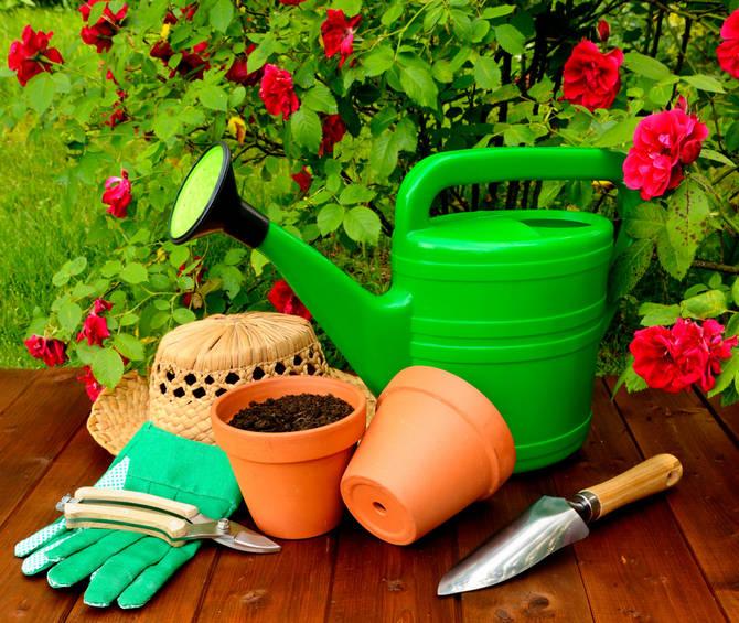 Основные подкормки для роз