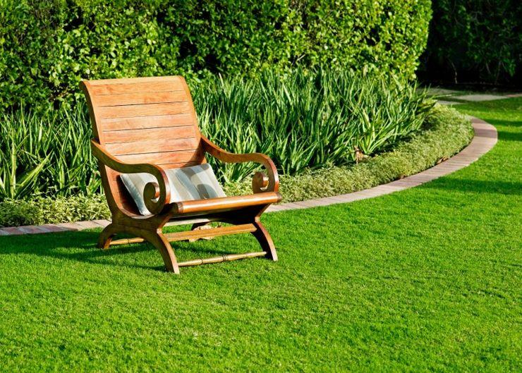 Как вырастить карликовый газон для ленивых. Виды ленивых газонов