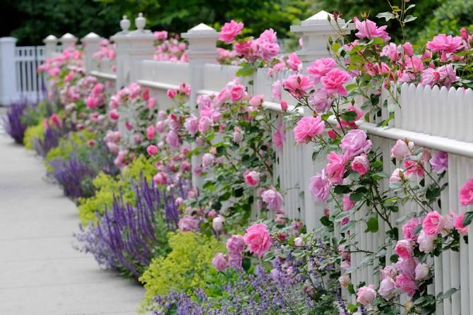 Классический розарий подразумевает посадку только роз.