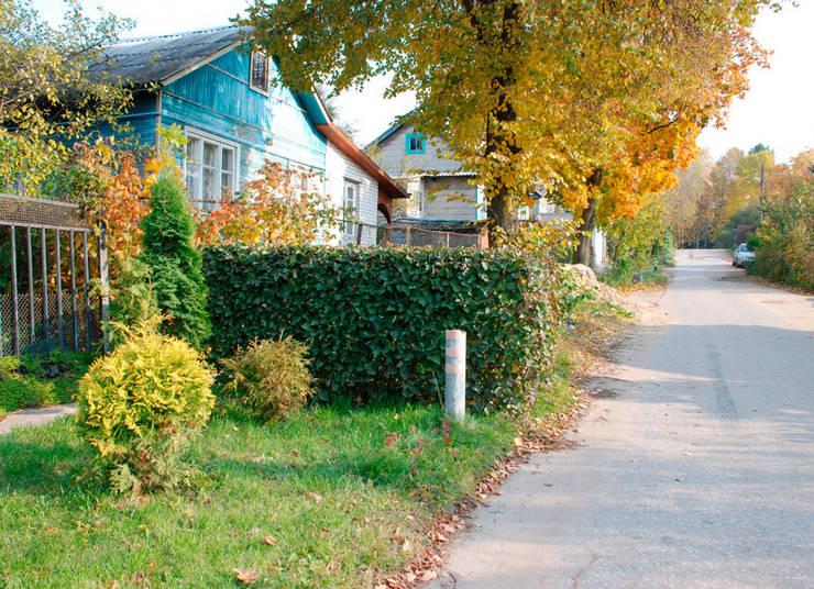 Преимущества живой изгороди из боярышника