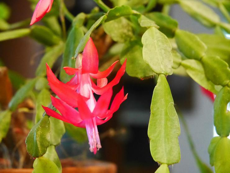 Основные причины отсутствия цветения