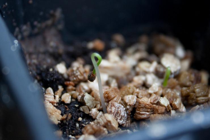 Посадка семян весной