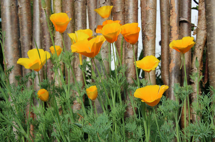 Основные правила выращивания и ухода
