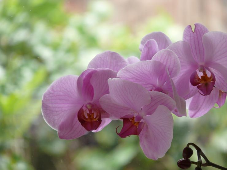 Особенности ухода за орхидеей в домашних условиях до и после цветения. Советы. Фото