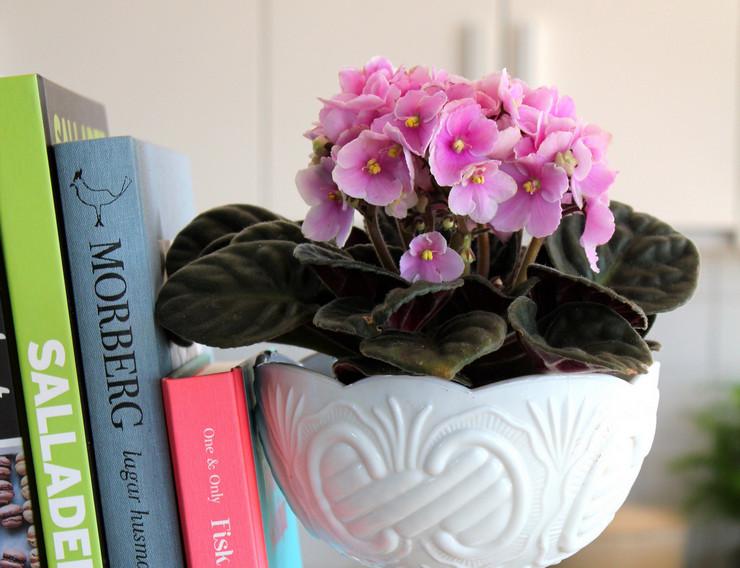 Сенполия или фиалка «Узамбарская» не только обладает прекрасным видом, но еще и очаровывает приятным ароматом.