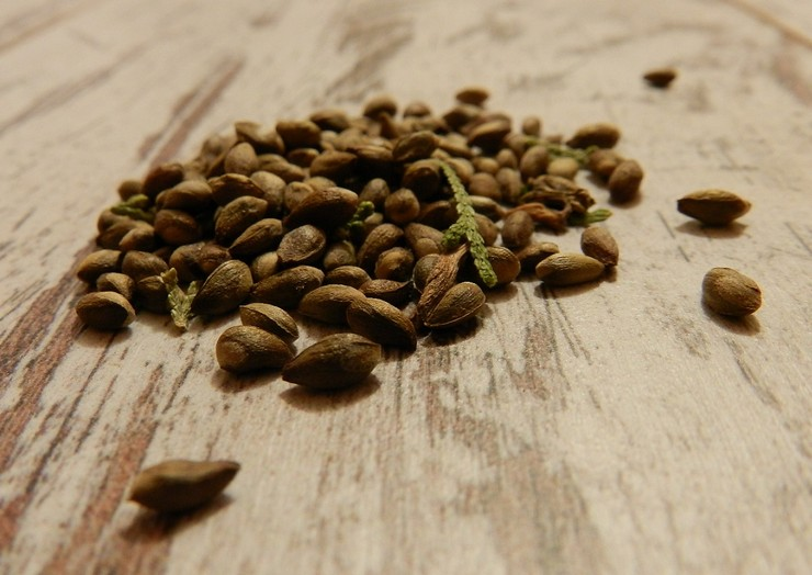 Практические советы по выбору семян, их подготовке и выращиванию смогут облегчить процесс начинающим любителям-садоводам.