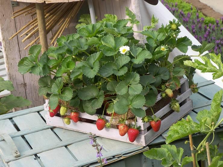 Штамбовые формы плодово-ягодных культур