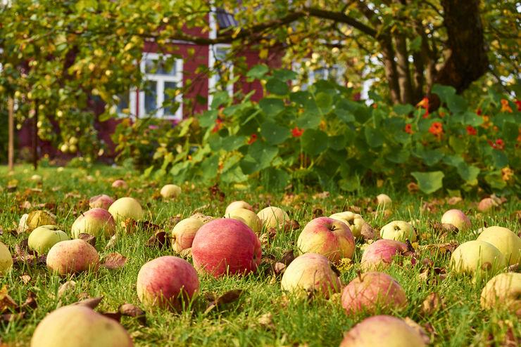 Плодовые деревья и ягодные кустарники в маленьком саду