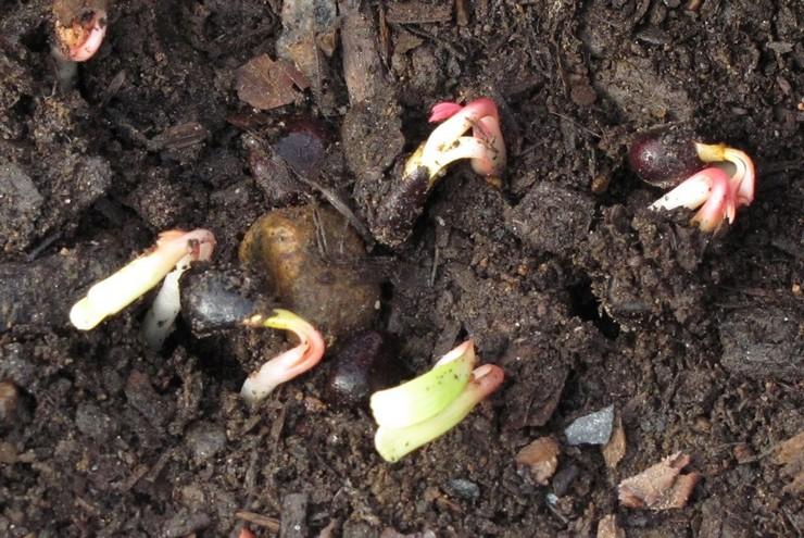 Советы по проращиванию семян