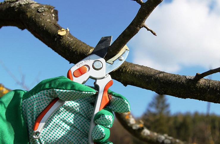 После тщательной уборки можно переходить к обрезке плодовых деревьев
