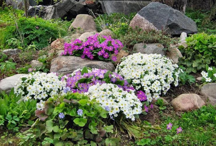 Виды и сорта растений для альпийской горки