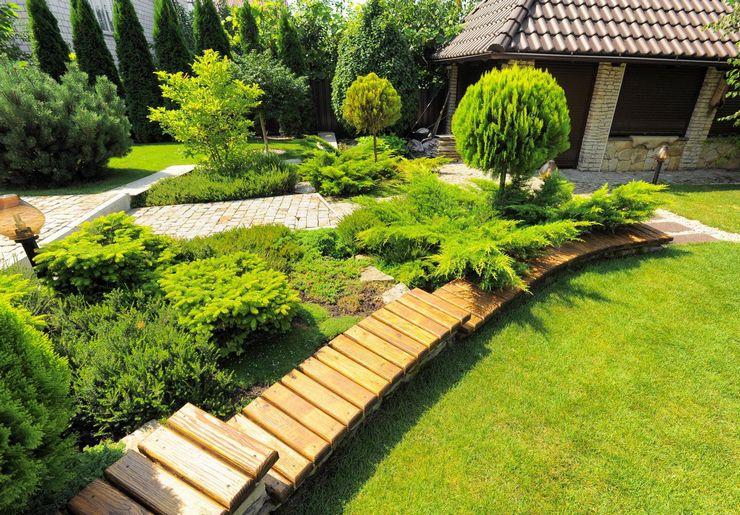 Вечнозеленые растения в ландшафтном дизайне