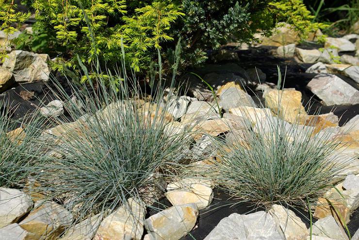 Посадка вечнозеленых растений и правила ухода