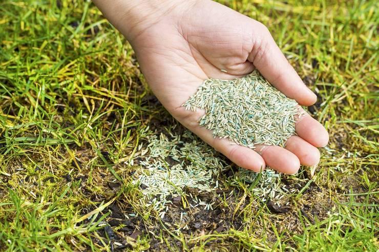 Способы создания газона