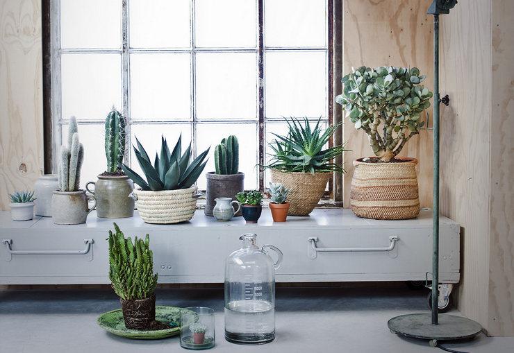 Какие комнатные растения выбрать?