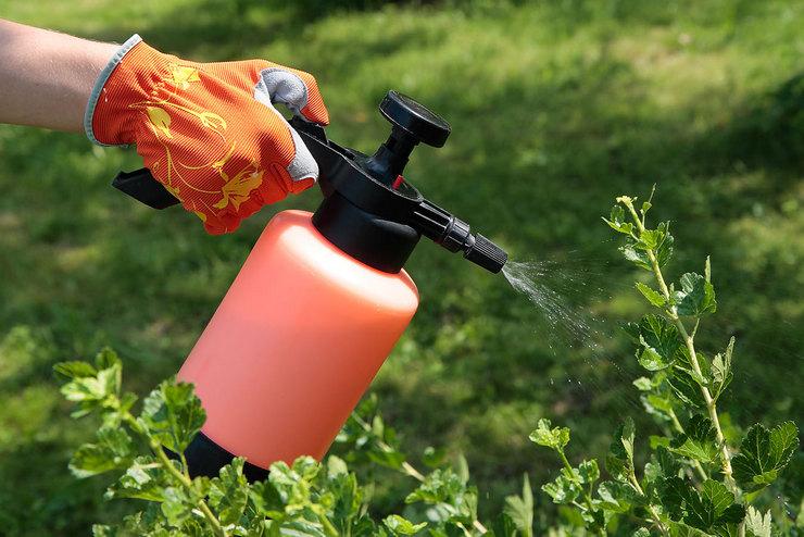 Биопрепараты для защиты растений от различных болезней