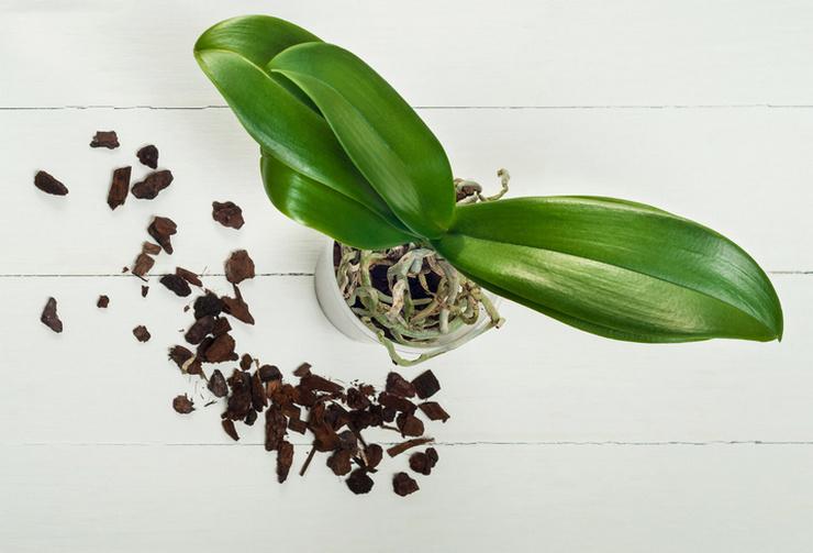 Почва для выращивания эпифитов