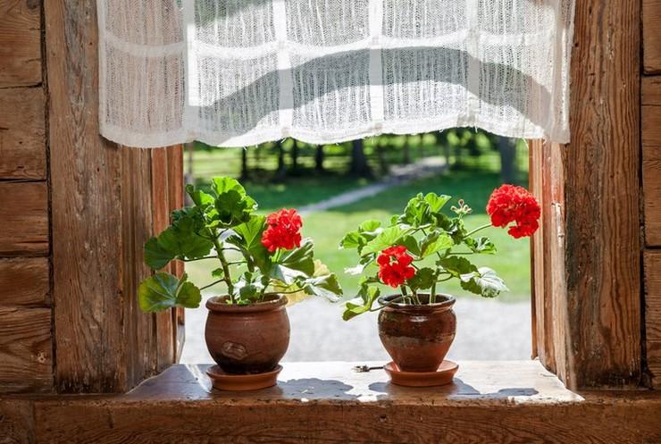 Лето – это самое активное время для роста и развития комнатных растений