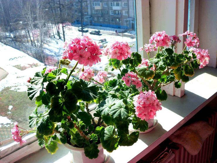 В зимние месяцы большое значение для комнатных культур имеет место выращивания