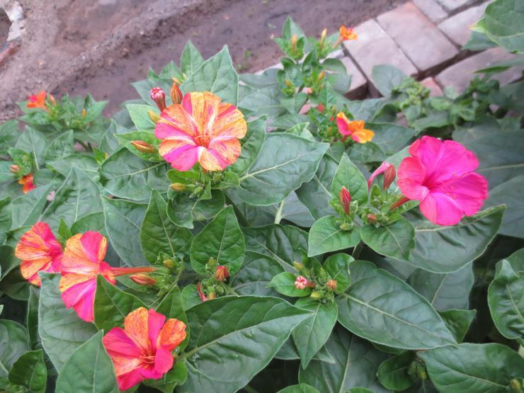 Основные правила ухода за цветком