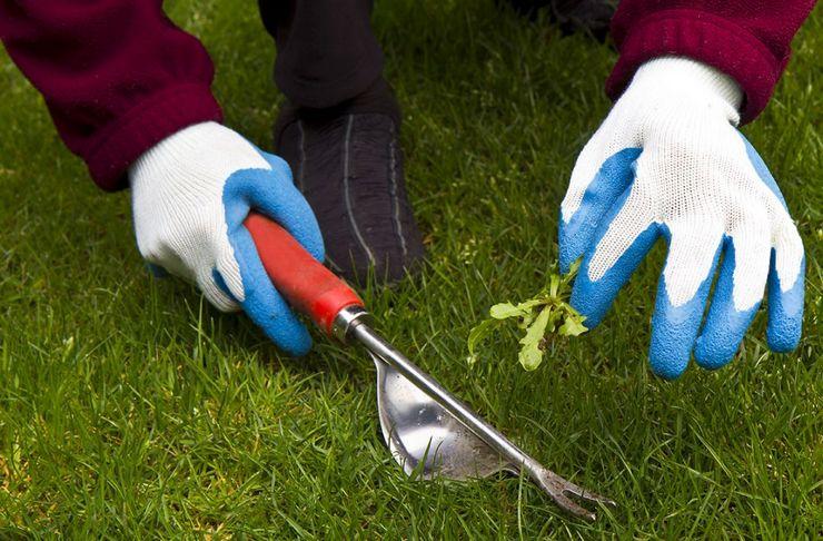 Ручная прополка подразумевает выбирание всех корешков и их частей многолетних трав во время перекапывания земельного участка