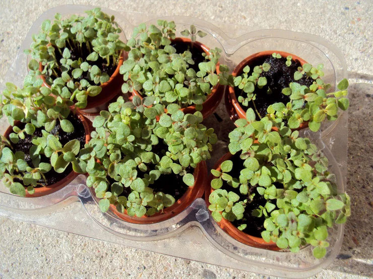 Посев семян и выращивание рассады