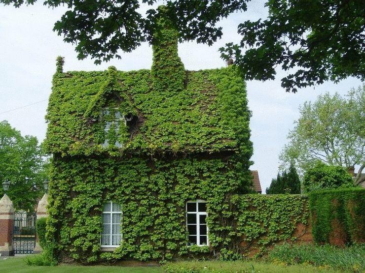 Озеленение фасада дома