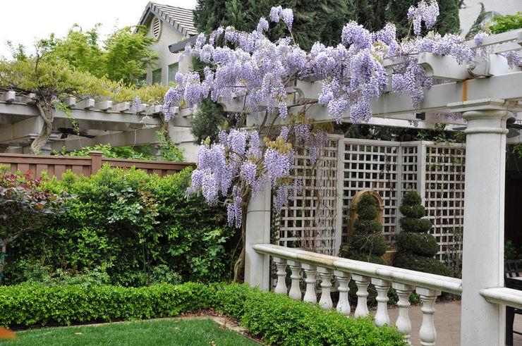 Уход за глицинией в саду