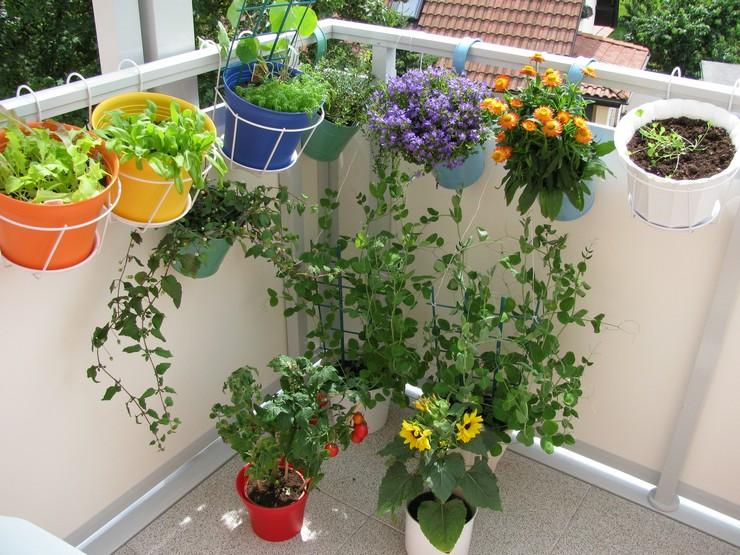 Наиболее популярные вьющиеся растения для балкона