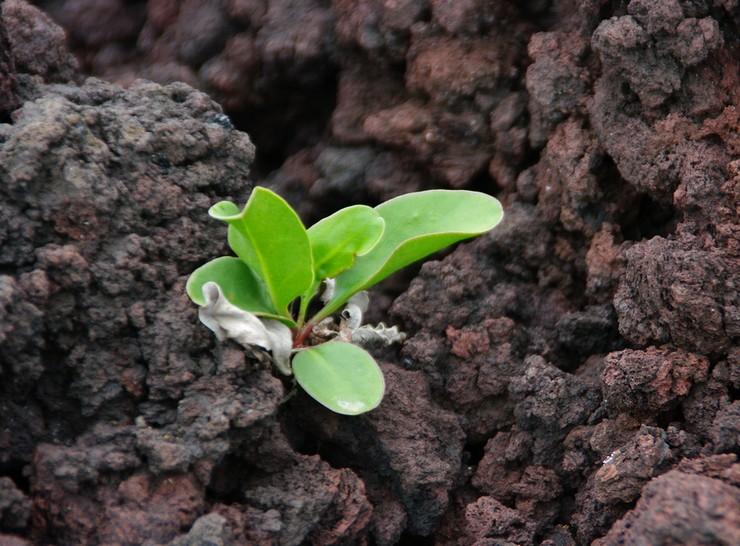 Выращивание статицы из семян
