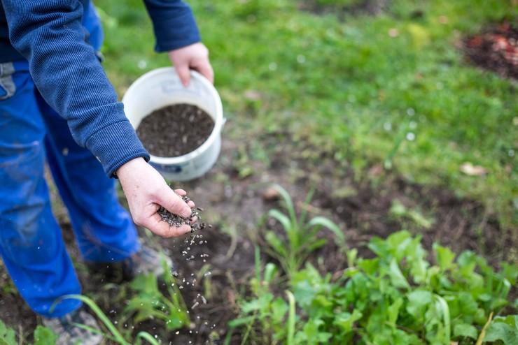 Как и чем подкормить рассаду томатов