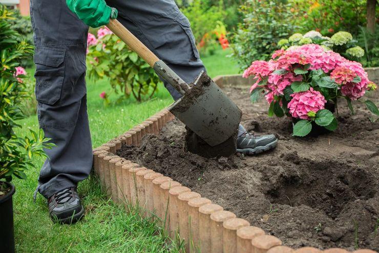 Правила выращивания гортензии