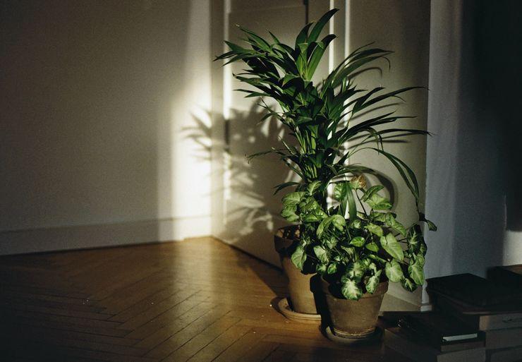 Какие комнатные растения могут расти в тени