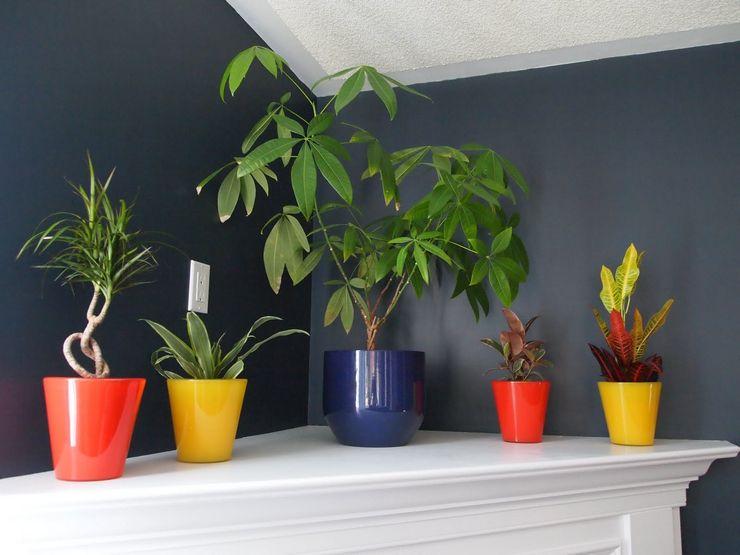 Как выбрать растение для тенистого места
