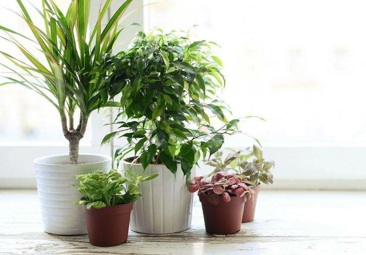 Что такое период покоя у растений