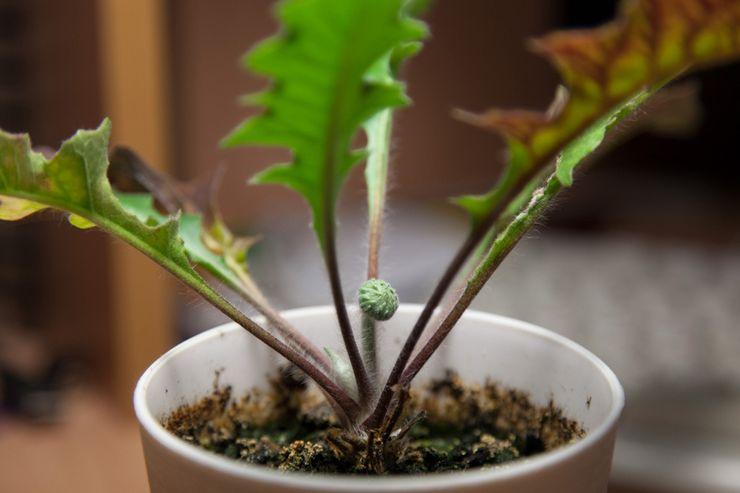 Как вывести растение из периода покоя