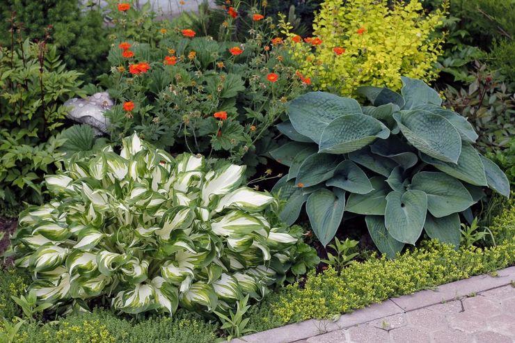 Особенности тенелюбивых растений