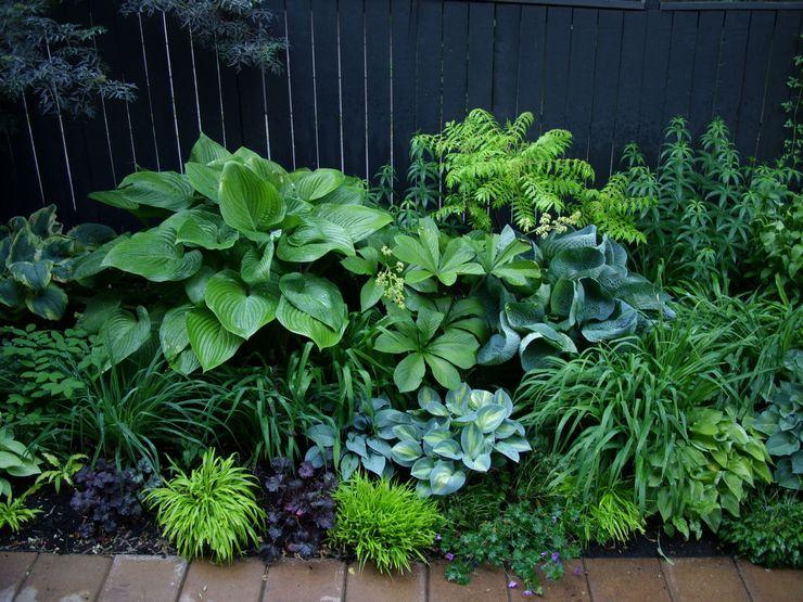 Как выбрать тенелюбивые растения для сада