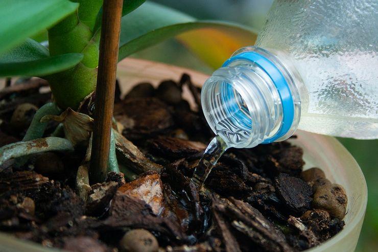 Аквариумная вода для полива комнатных растений
