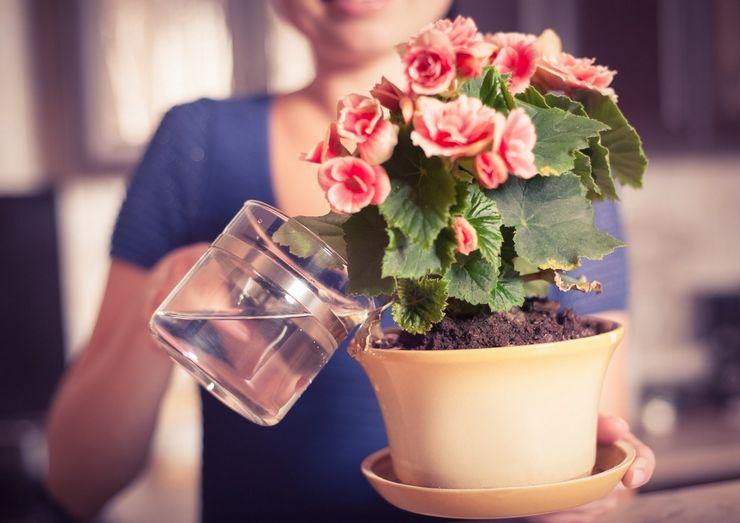 Какой водой лучше поливать цветы