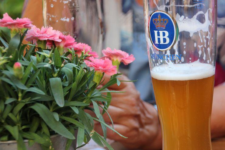 Можно ли пивом поливать цветы