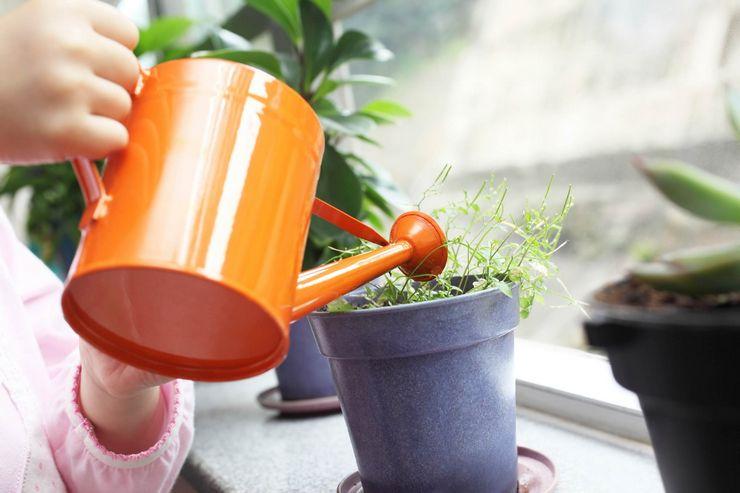 Можно ли поливать цветы сывороткой