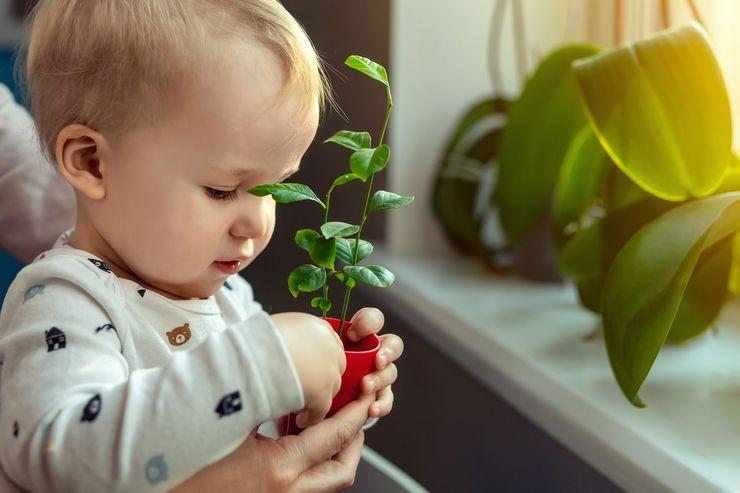 Топ 10 комнатных растений для детской