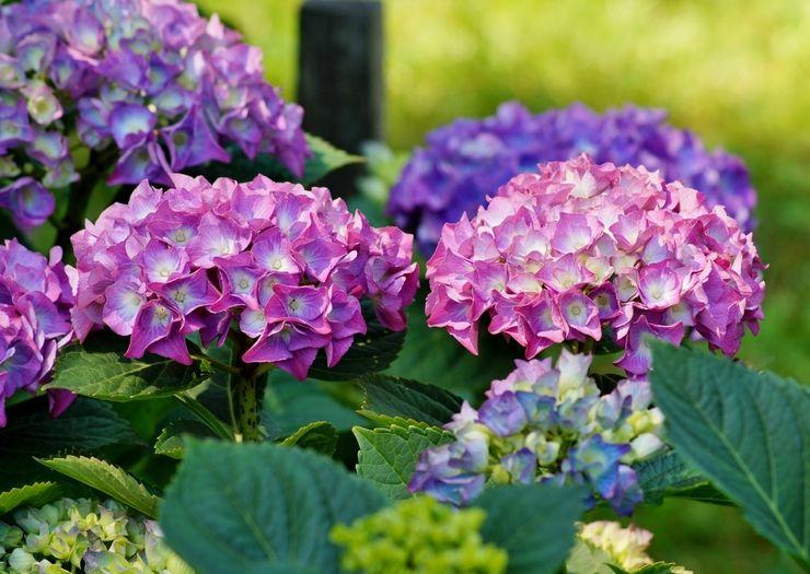 Красивоцветущие многолетние цветы