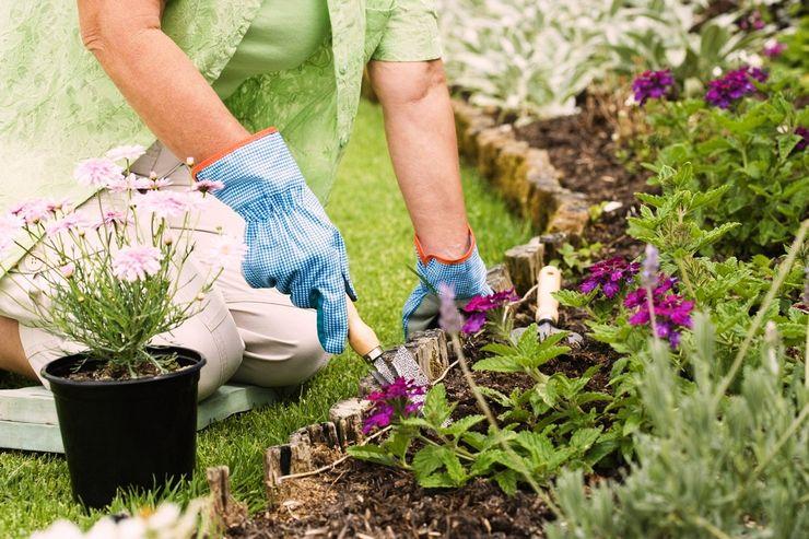 Уход за садовыми многолетними цветами