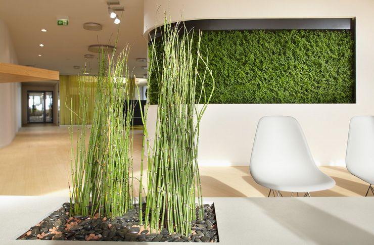 Зелёные растения для разных стилей интерьера